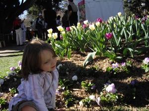 tulips in bowral 047